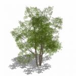 View Larger Image of Generic Tree 02