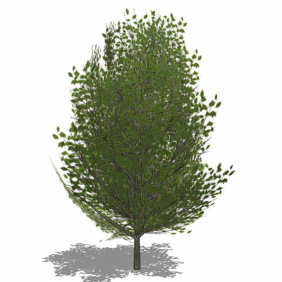 Generic deciduous tree in Summer foliage with semi....
