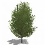View Larger Image of Generic Tree 03