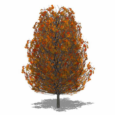 Generic deciduous tree in Autumn colours with tran....