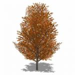 Generic deciduous tree in Autumn foliage with tran...