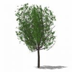 One of a series of very low-poly trees (57 faces),...