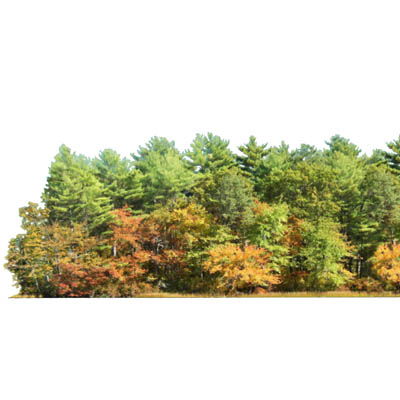 Stand of 30' / 10m 2D conifers. Can be used by its....