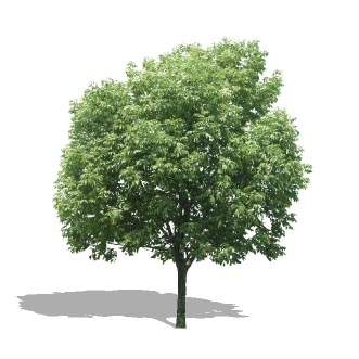 Tree 04 3D Model - FormFonts 3D Models & Textures
