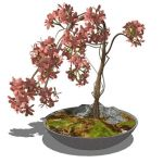 Small, low-poly shrub in a variety of pots. The pl...