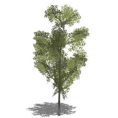 Generic tree in opaque and semi-transparent config....