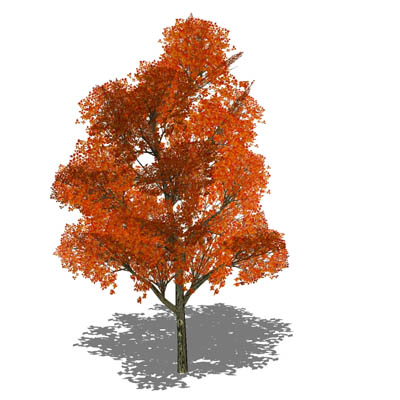 Generic deciduous tree in opaque and semi-transpar....
