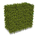 A generic hedge approx 3' / 1m 