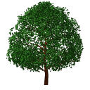 View Larger Image of FF_Model_ID9637_TreeDeciduous1011.jpg